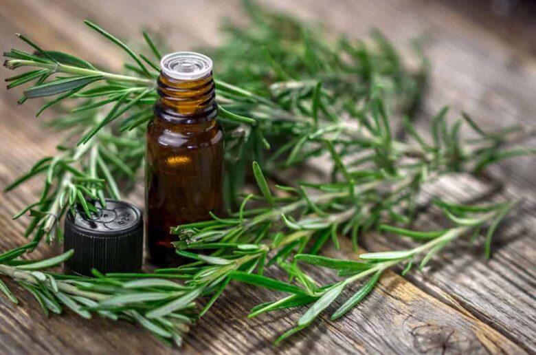 Эфирное масло розмарина для похудения и целлюлита