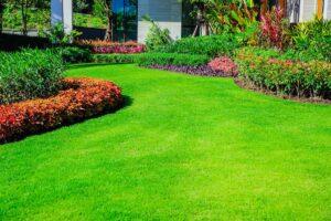 Газонная трава. Как посадить газон в частном доме своими руками?