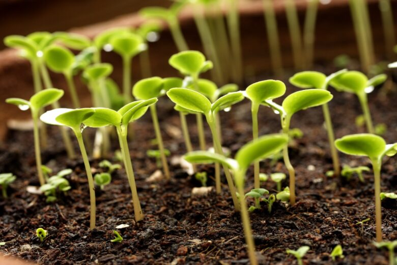 Как подготовить почву для посадки и сделать плодородной