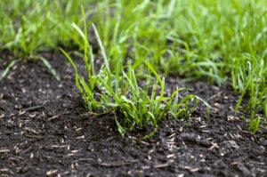 Подсев газона. Как подсеять траву на уже растущий газон?